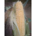 Кукуруза, 1 шт.